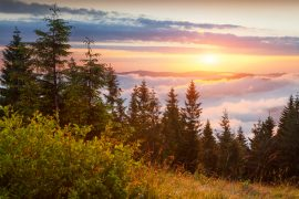 Colorful summer sunrise in the Carpathian mountains