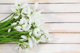 Beautiful snowdrops on wooden background