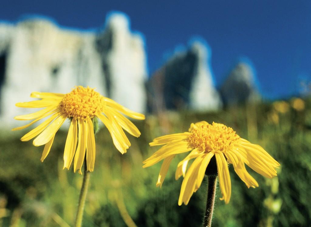 Blumen29.jpg
