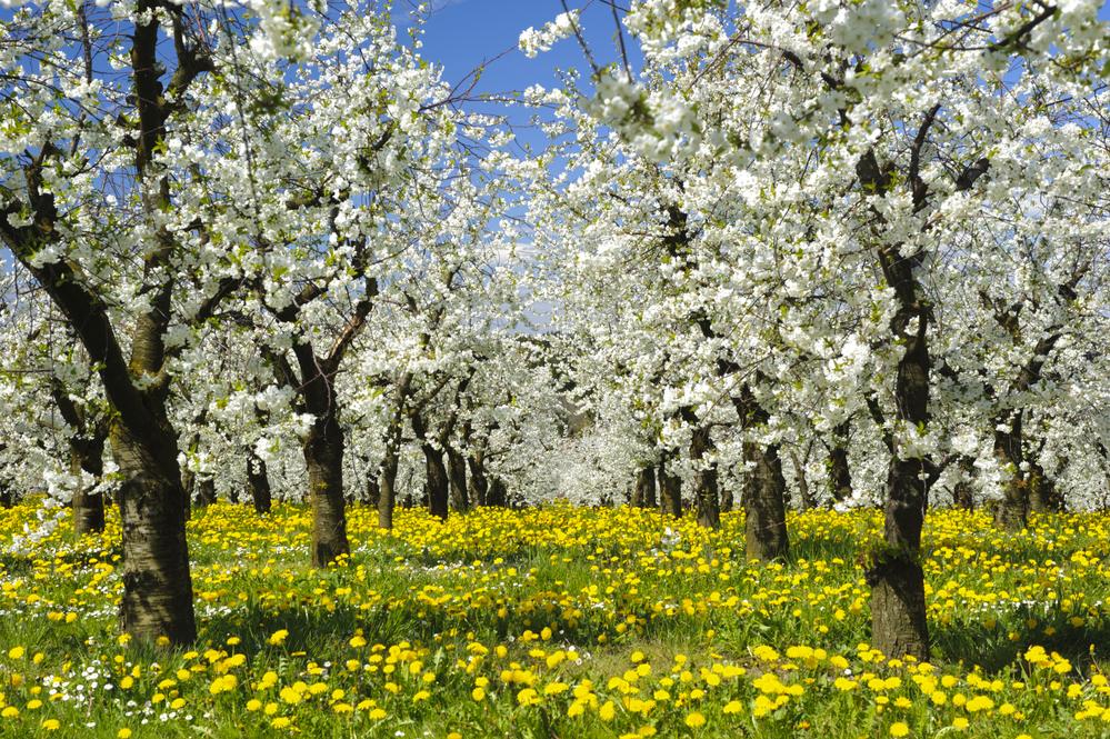 пищевая аллергия супрастин