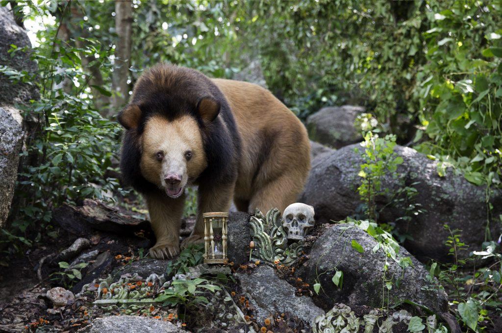 Golden moon bear 3